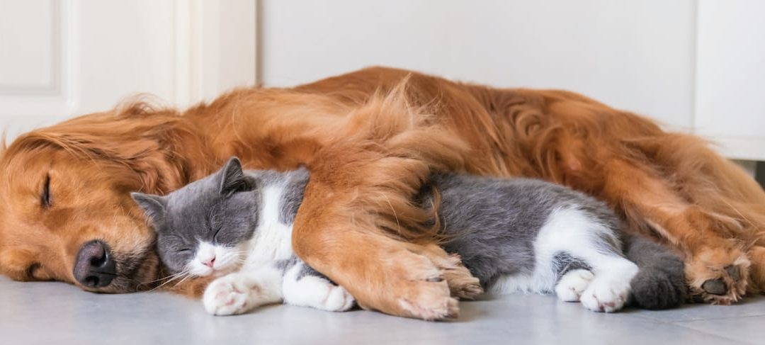 Winter Warmers – keeping your pet warm